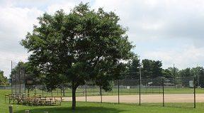 Bors Field Canton Parks & Rec