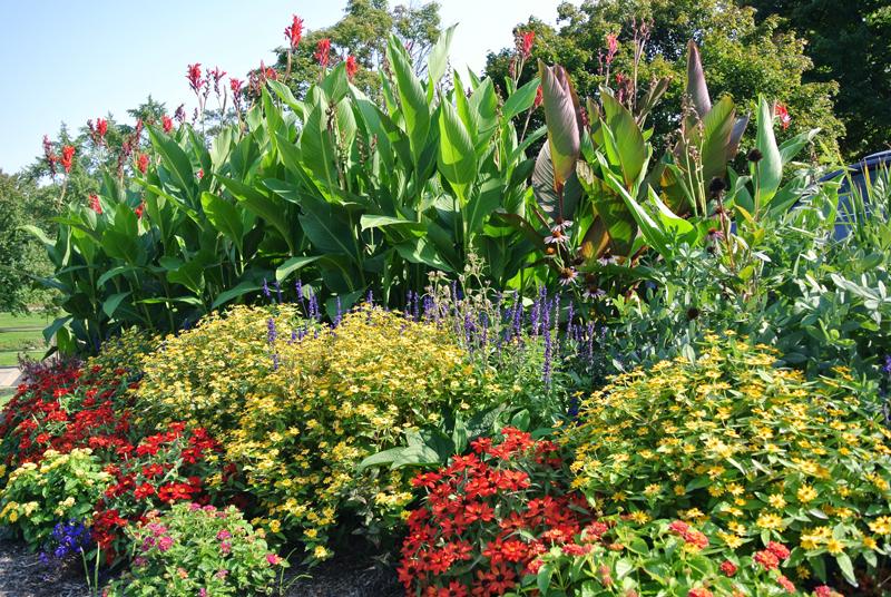 Canton Garden Center Flowers